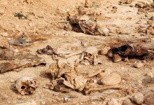 Photo of هيئة مختصة تستأنف أعمالها بفتح مقابر جماعية في سنجار